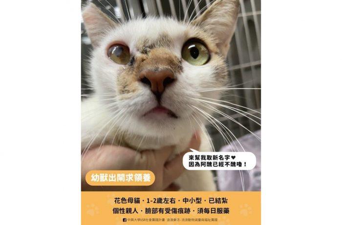 【USR辦公室】興大浪浪團隊醫治 母貓阿醜重生等待新家