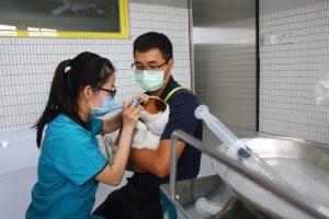 【USR辦公室】為搜救犬無償診治 興大USR「浪愛齊步走」提升動物福祉